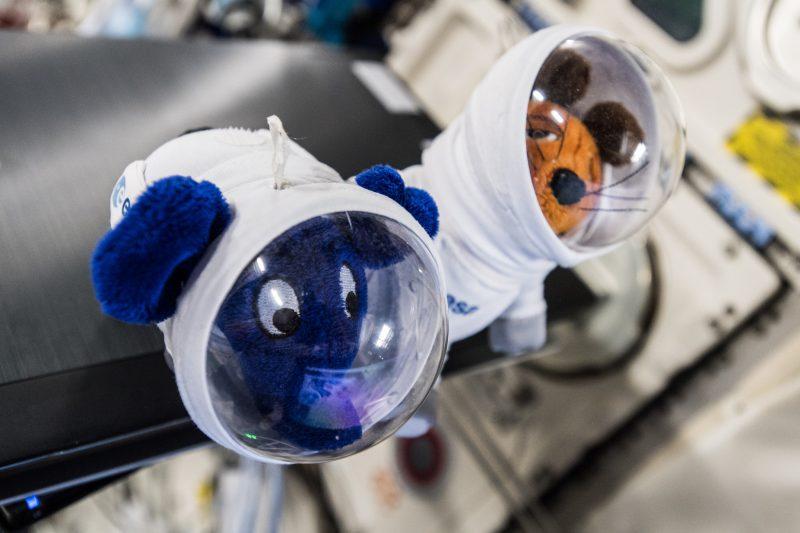 Führung durch das Europäische Astronautenzentrum